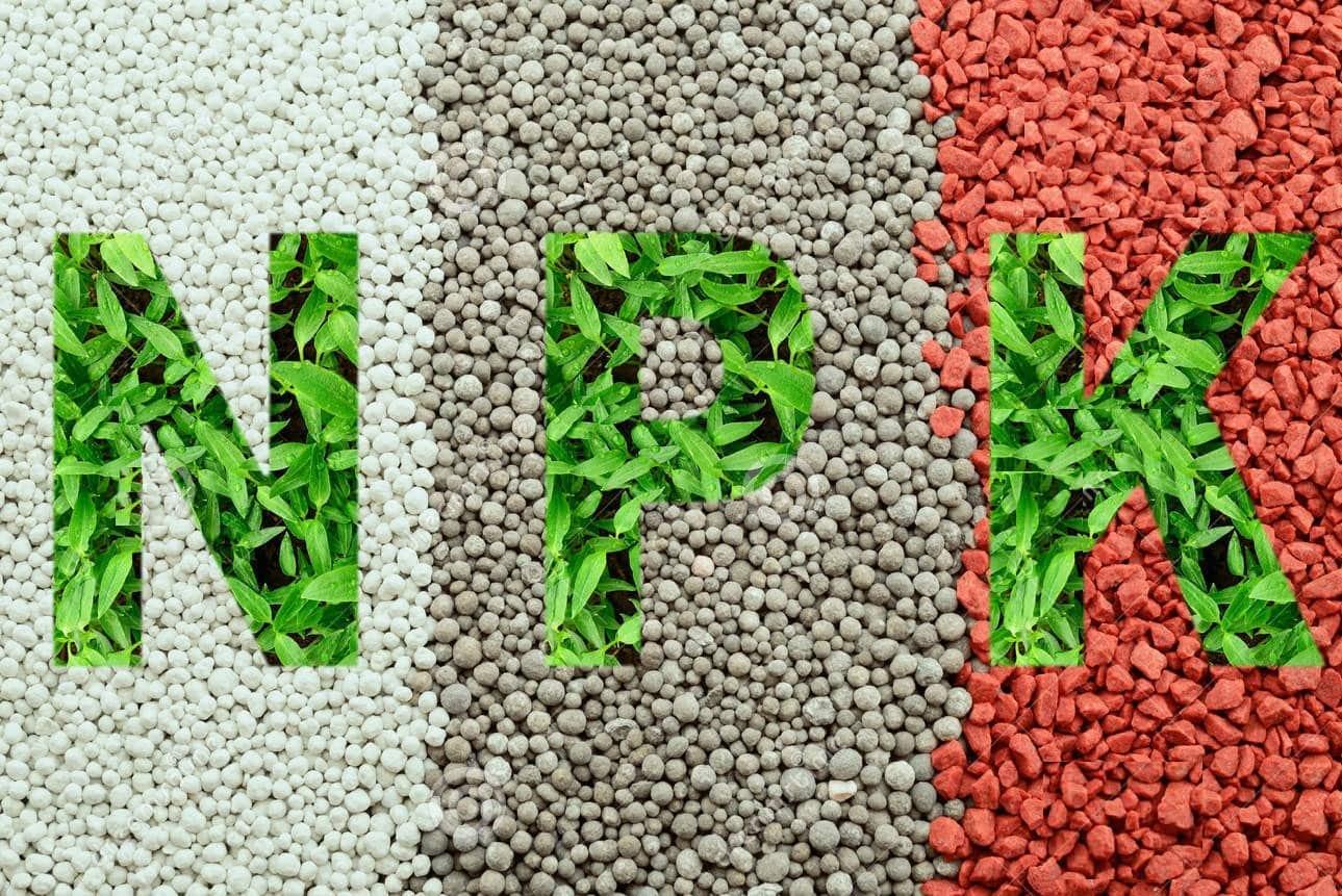 npk-letters-made-green-leaves-omposite-mineral-fertilizers-background-n-nitrogen-p-phosphorus-k-potassium-kalium-68576884-1